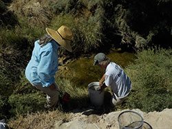 two scientist looking in a creek for desert pupfish with rocks and bushes