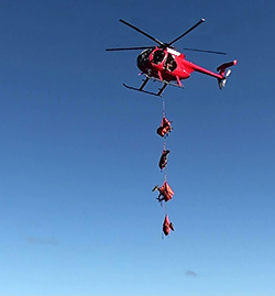 four deer are suspended in the air, in safety harnesses, from a red helicopter