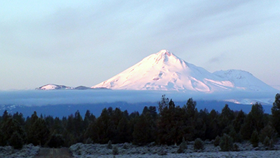 "Science Spotlight: Studying a ""Foundation Species"" in the Shadow of Mount Shasta"