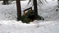 A trap made of small logs covered with pine and fir fronds is camouflaged in the snow between two tree trunks.