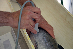 a man's hands hold a large salmon in an examining trough