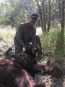 a man kneels in grassy forest next to an anesthetized, adult brown bear