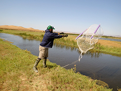 A man throws a trap into a marsh slough