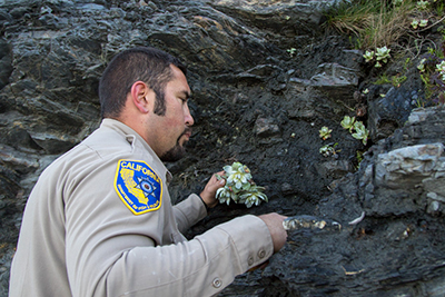 Succulent Plants Returned to the Cliffs from Where They Were Poached