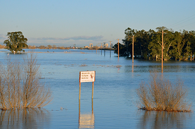 Wildlife Corridors at Yolo Bypass Will Help Animals Escape Flooding