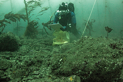Scuba diver underwater holding white board and mesh bag near rocky floor with kelp in background