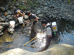Three men in and alongside streambed.One man is in the water wearing a gray machine backpack while holding a long yellow rod with a round metal hoop at the end. Another man in the water is bent over holding a small net about the water. A third man crouches alongside the water on top of rocks peering into white bucket. Another white bucket is nearby.