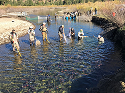 Several people wearing waders in streambed holding nets in water