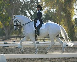 Woman dressed in dressage clothing riding white horse