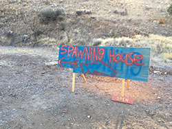 Blue sign with red spray-painted text reading 'house spawning'