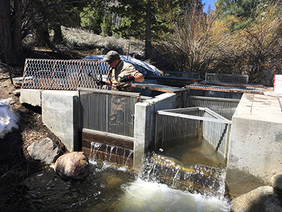 Concrete structure in stream with slatted metal gates and chutes. Man wearing camo waders, beige long sleeved shirt, gray call cap and black rubber gloves standing behind gate holding hammer.