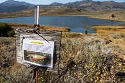 Laminated sign with fish that reads attention anglers attached to old wooden sign on metal post in grassy area with lake and mountains in background