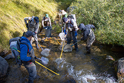 Seven people in waders and machine backpacks holding nets and yellow poles in stream.