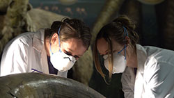2 female forensic specialists examine tusk