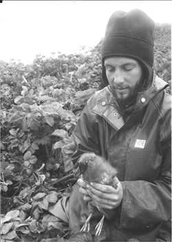 Black and white photo of bearded man wearing winter hat and rain jacket, holding a tufted pigeon with dense shrubbery in background.