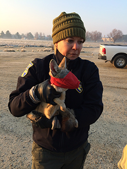 woman wearing black jacket and green beanie hat holding small san joaquin kit fox with red face mask