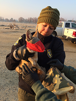 woman wearing black jacket and green beanie hat holding small san joaquin kit fox with red face mask. Also pictured are another person's black gloved hands and camo jacket covered arms reaching out to kit fox.