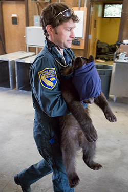 Man in blue CDFW uniform carries small bear with large mask covering bear's face
