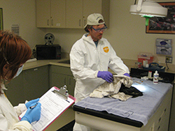 Laboratory with table covered in blue towel with oiled bird wrapped in towel held by man wearing white coveralls, white hat, glasses, and purple gloves. Woman also standing with mask, white coveralls, blue gloves, holding a clipboard and pen.