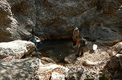 scientist capturing fish in a drying pool in a steep rocky area - click to enlarge in new window