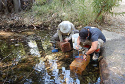 retrieving fish from a minnow trap in a shallow creek with tall trees - click to enlarge in new window