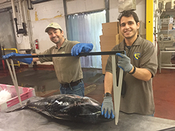 Two smiling men wearing gloves holding up large calipers above large fish laying on table.