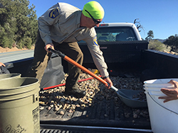 Man in Department of Fish and Wildlife uniform standing in the bed of a truck shoveling rocks