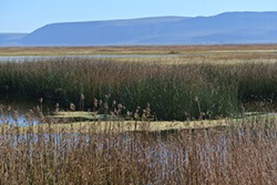 Wetland with tule grass in foreground and mountains in background.