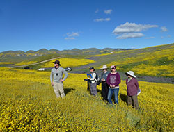 five scientist standing in a field of yellow flowers with a river and mountain in the back with blue sky in the horizon