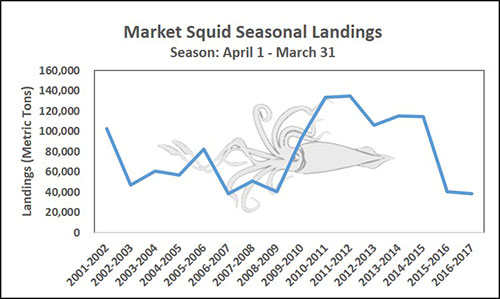 Chart of Market Squid Seasonal Landings SEason: April 1 - March 31