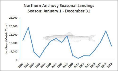 Chart of Northern Anchovy Seasonal Landings Season: January 1 - December 31