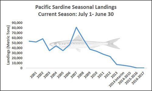 Chart of Pacific Sardine Seasonal Landings Current Season: July 1 - June 30