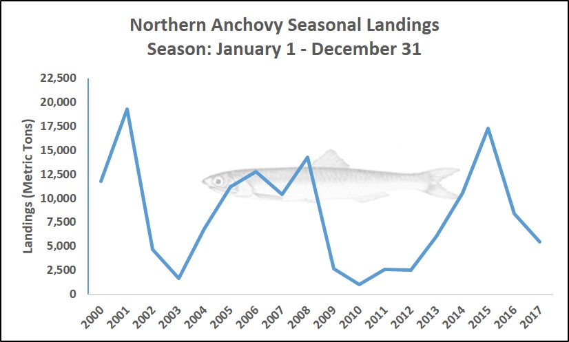 Graph showing seasonal landings of Northern Anchovy