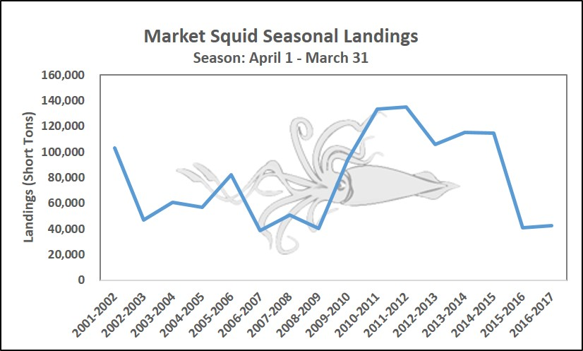 Graph showing seasonal landings of Market Squid