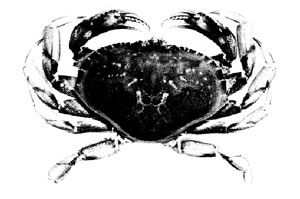 Figure 1 - crab illustration