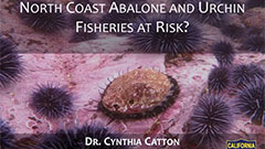 The Perfect Storm: North Coast Abalone and Urchin Fisheries at Risk?