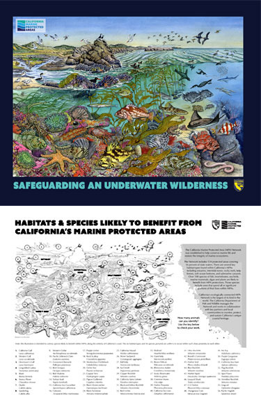 MPA Habitats Species Poster thumbnail - link opens in new window
