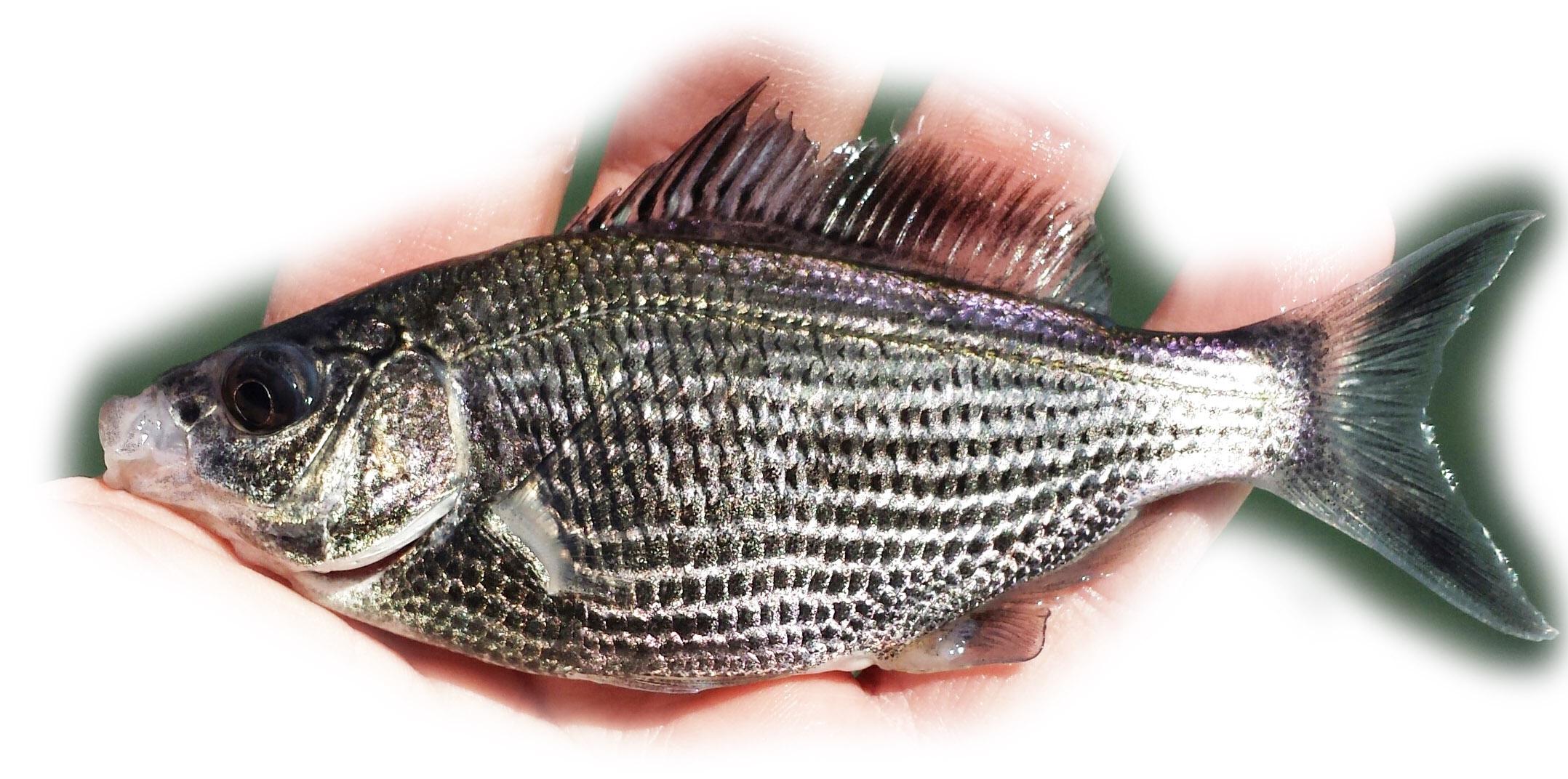 marine region s fish identification quiz fish