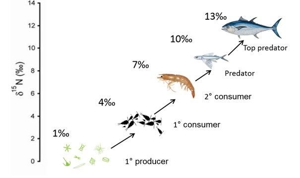 Trophic level diagram