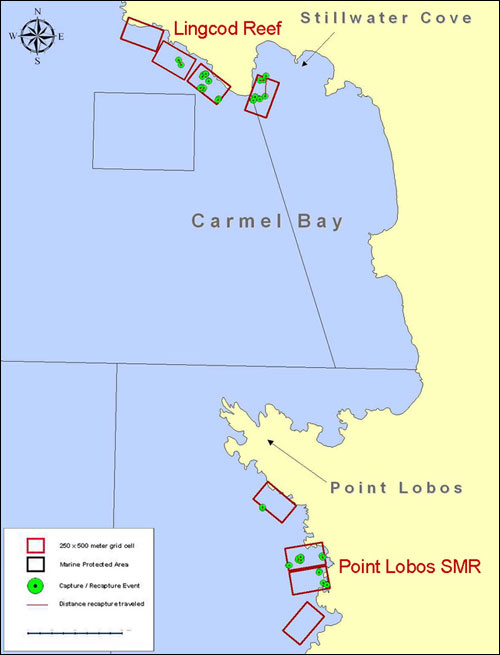 Map of Carmel Bay showing grid cells at Lingcod Reef and Point Lobos sampling sites