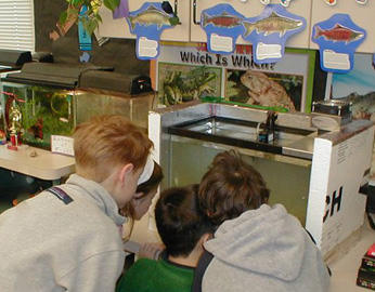 young students examining fish in tank