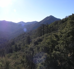 An example of typical band-tailed pigeon habitat, oak and mixed conifer forest in Monterey County. Photo by Krysta Rogers, 2011.
