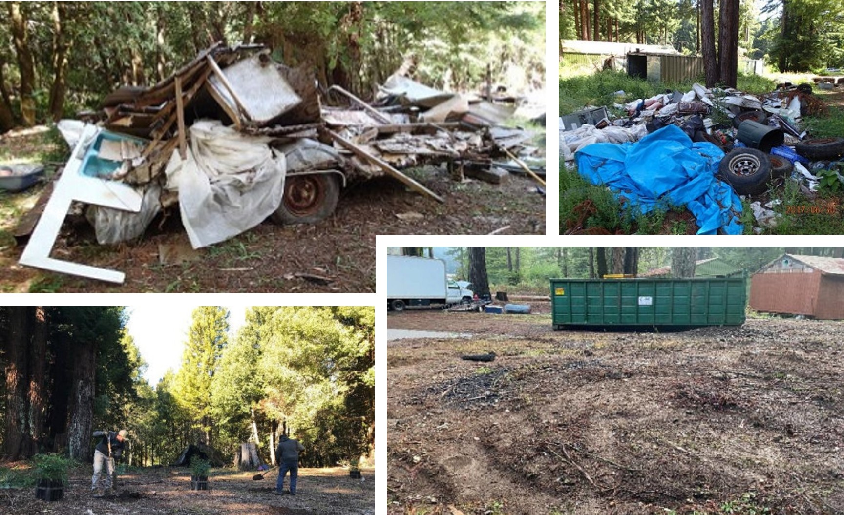 Trash piles at an illegal grow near the Mattole River (top left and right), garbage and refuse organized for disposal (bottom right), and replanting efforts of 160 Sequoia sempervirens (bottom left)