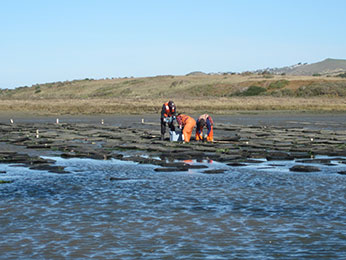 staff inspecting oyster in farm