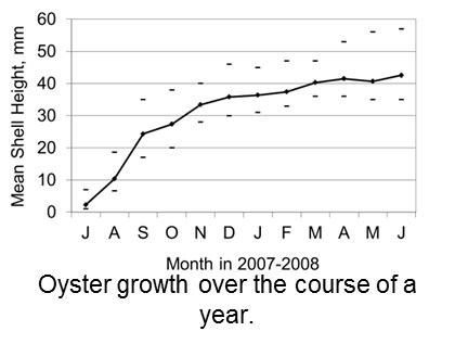 Chart of the oyster growth over the course of a year