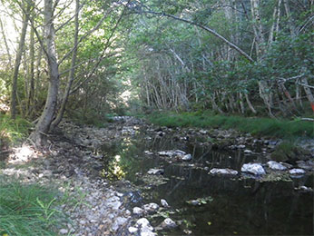 "Hollow Tree Creek (South Fork Eel tributary)"" ;"