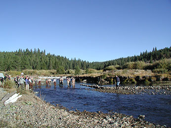 Kokanee egg collection at Little Truckee River