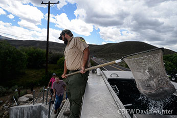 Stocking rainbow trout for anglers CDFW photo by David Hunter
