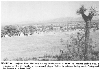 Mojave Hatchery River 1950