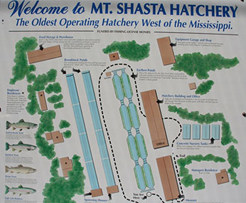 Welcome to Mt.Shasta Hatchery Sign